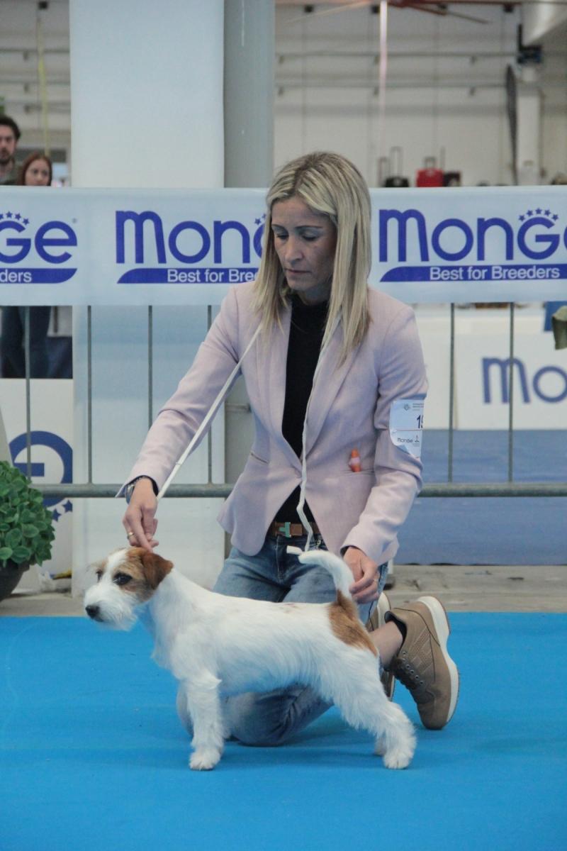 GRANLASCO MARILYN  Jack Russell Terrier Proprietario - MARINELLI ANNALISA